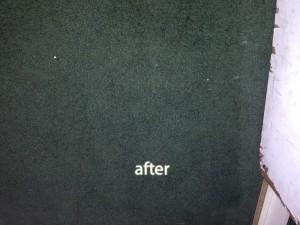 Katy -2-after-carpet